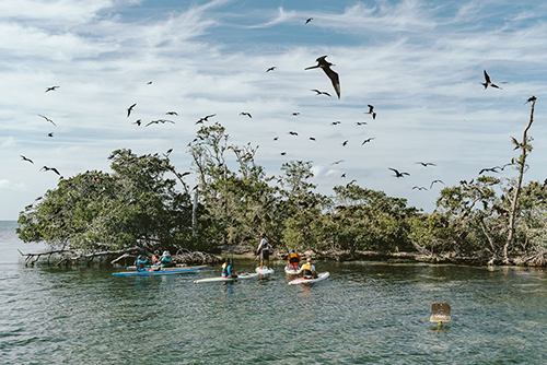 Paddling to Bird Island, Belize